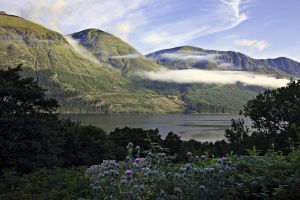 Loch Lochy Thistle
